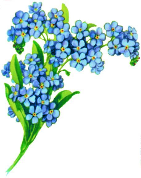 Forget-Me-Not Firmament