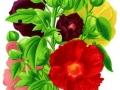 Outhouse Hollyhocks Single Mixed Colors