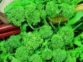 Broccoli De Rapa