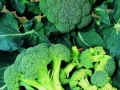 Broccoli Calabrese