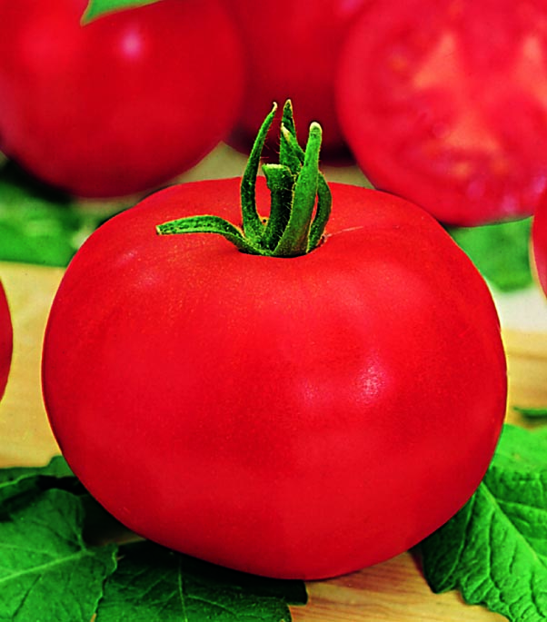Tomato Celebration