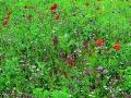 Wildflower Hart's Special Mixture