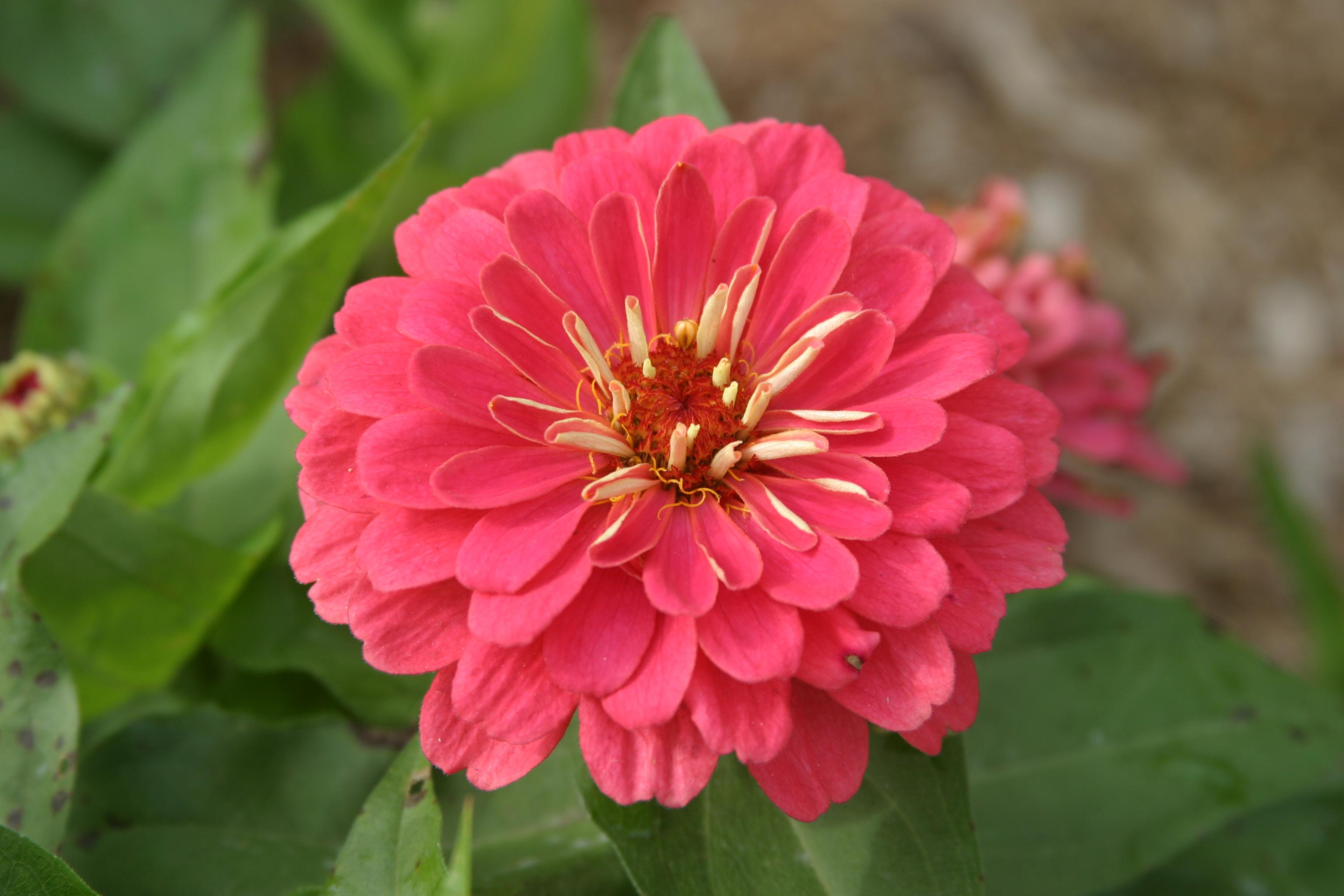 Beautiful Flower Arrangements Cut Flowers Charles Hart Seed Company